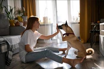 Уровень персональной ответственности и защита от кражи: в России хотят маркировать домашних животных