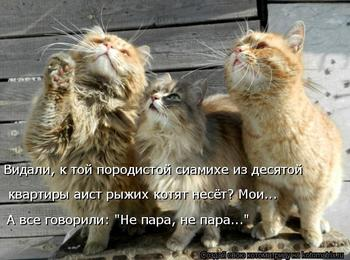 Веселые картинки: кошкоматрицы;))