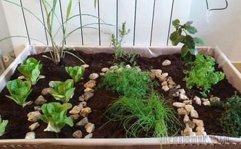 Сад в квартире своими руками из подручных средств