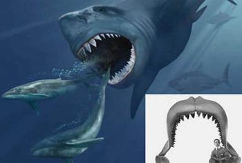 10 cамых странных акул, известных нам сегодня