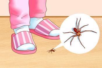 Как избавиться от насекомых в вашем доме