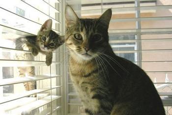 Родители и их дети в царстве животных