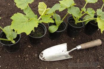 Высадка рассады овощных и декоративных культур – благоприятные дни в 2018 году