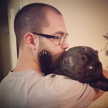 16 смешных домашних животных, которые ненавидят целоваться и обниматься