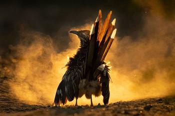 Птичий конкурс Audubon Photography Awards 2021