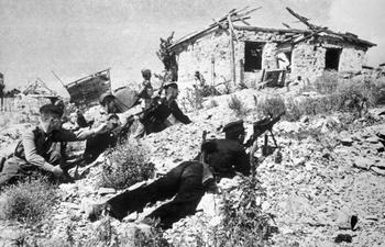 Корова-снабженец и черепаха-диверсант: как животные помогали советским солдатам в боях на Малой земле