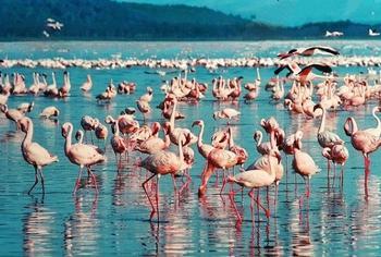 10 потрясающе красивых озер с самым необычным цветом воды