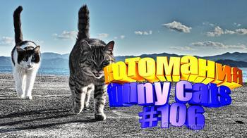 Смешные коты | Приколы с котами | Видео про котов | Котомания #106