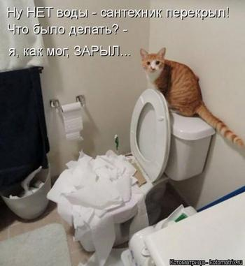 Новая котоматрица для всех