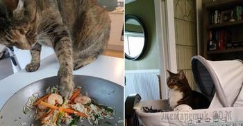 20 примеров того, что с приобретением кошки ваша жизнь кардинально поменяется