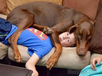 Собаки, которые чихать хотели на ваше личное пространство