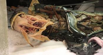 Неведома зверушка: во льдах Антарктики нашли монстра