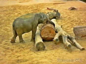 Сказочный слон (Владимир Шебзухов)