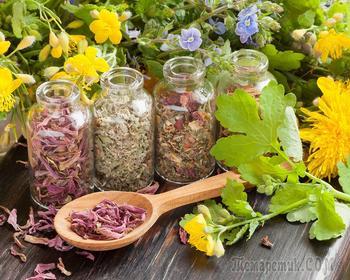 8 самых мощных трав для женского здоровья, баланса гормонов, устранения симптомов ПМС