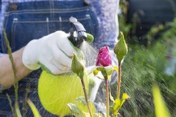Основные ошибки применения пестицидов