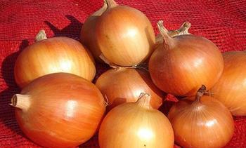 Характеристика и описание сорта лука Стригуновский местный, выращивание