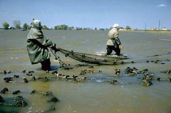 Как добывали черную икру в Советском Союзе