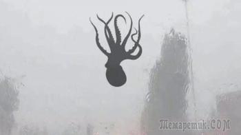В Китае прошёл дождь из креветок и осьминогов