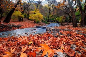 Осеннее (Стих)