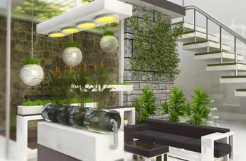 Тенелюбивые растения для дома: фото и названия
