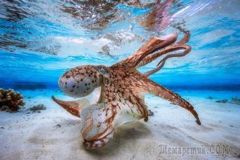 Победители фотоконкурса Underwater Photographer of the Year 2017