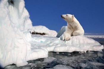 20 фактов о Северном полюсе, которые знают не все