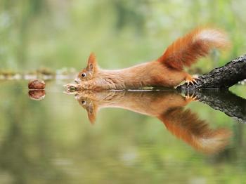 Позитив из дикой природы