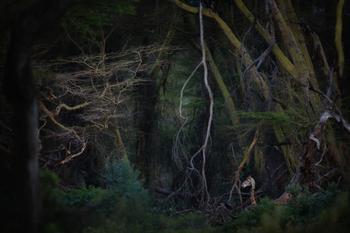 Фотографии победителей конкурса на лучшую природную фотографию года Nature Photographer of the Year 2020