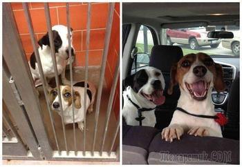 Счастливые морды спасенных из приюта собак, по дороге в новый дом