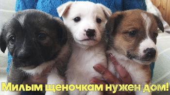 Троим щенкам нужен дом