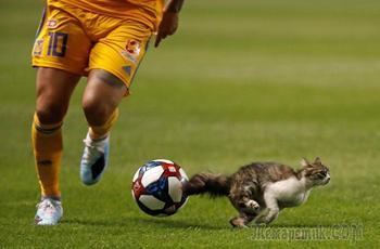 Животные на спорте