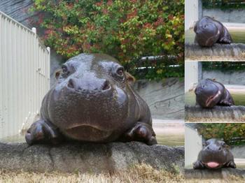 15 фотографий животных, которые сделают ваш день
