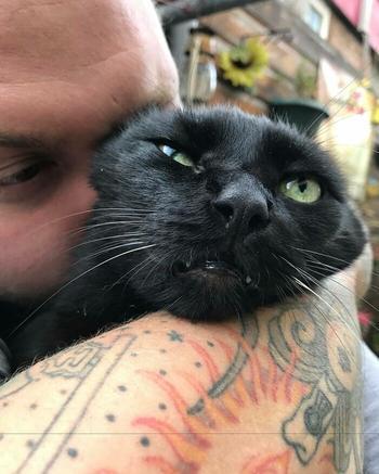 19 кошек, которые наотрез отказываются обниматься, и их протест буквально написан на их мордочках