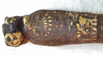 Что на самом деле скрывает в себе египетская «мумия сокола»