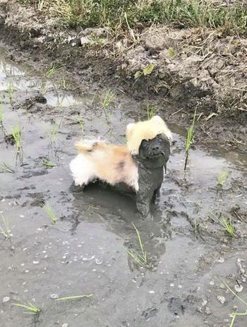 Приколы про собак