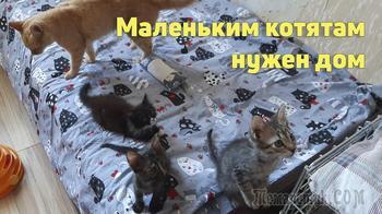 Маленькой кошачьей банде нужен дом!