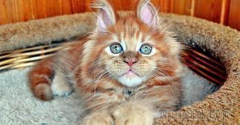 20 чудесных животных, которые профессионально заряжают хорошим настроением