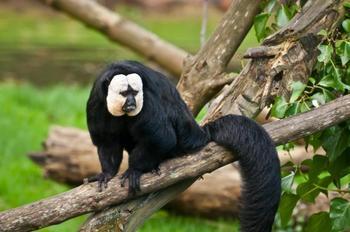 Самые удивительные млекопитающие