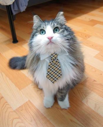 Стильные кошки, которые заставят вас почувствовать себя немодными