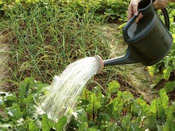 Как правильно поливать растения в огороде