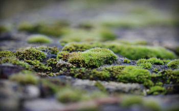 Почему в теплице зеленеет грунт, и как решить проблему без замены земли