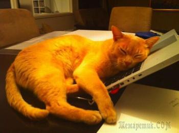 Кошки, любящие самые неподходящие места, чтобы прилечь