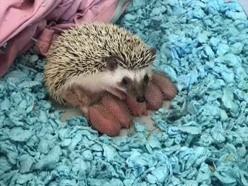 Самые милые и забавные снимки животных. Чистый позитив
