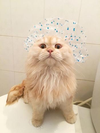 Сумасшедший кот, который обожает принимать душ