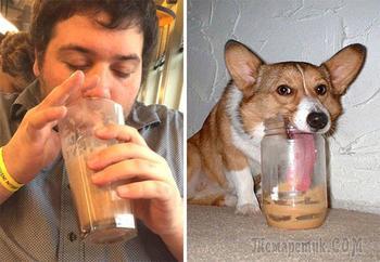 20 фотографий, где собаки удивительно похожи на людей