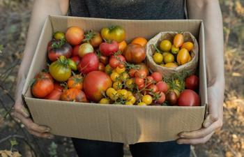Вредные советы: 7 вещей, которые не стоит делать с томатами в теплице