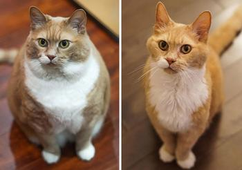"""30 потрясающих фотографий """"до и после"""", показывающих, как неуклюжих и неповоротливых существ превратили в счастливых кошек"""
