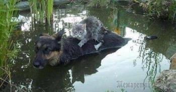 Несколько фотографий кошек и собак, от которых на душе становится теплее