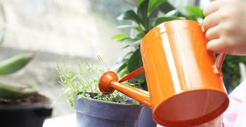 Можно ли поливать цветы кипяченой водой: польза и вред, советы по уходу за растениями