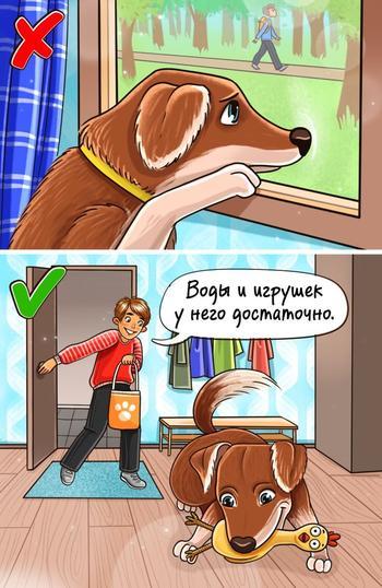 Что вызывает стресс у наших собак